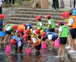 神田川湧水自然観察会